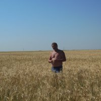 красиво в море пшеницы ходить :: игорь