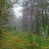 По утру в лесу туманном :: Юрий Кузмицкас