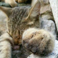 Последний снимок моего кота :: Galina Belugina