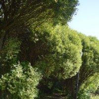 зеленый вал :: надежда