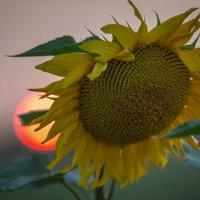Два Солнца ... :: Vadim77755 Коркин