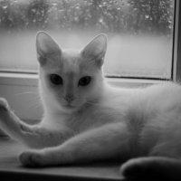 Под шум дождя :: Ирина Холодная