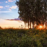 Летним вечером за околицей... :: Александр Никитинский