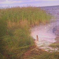 На озере :: Елена *