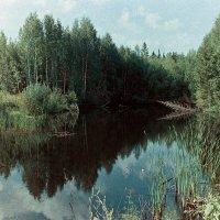 Лесное озеро. :: Валерий Молоток