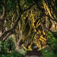 Дорога в неизвестность. Дремучий лиственный лес :: Valentina Ariel