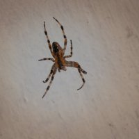 паук :: Александр Борисович