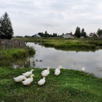 Жили у бабуси беленькие гуси.. :: Ната Волга