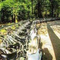 Велосипедная парковка :: Светлана Щербакова