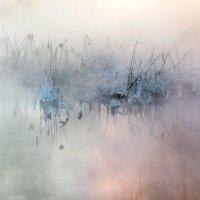 У воды в мороз :: Владимир Миронов