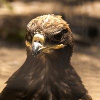 Резонансный Птиц. :: Эмиль Абд