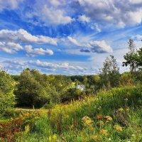 Летние  травы. :: Валера39 Василевский.