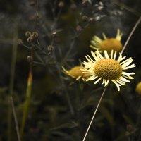 Цветок :: Rina .