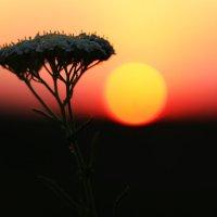 NaturPur :: Elina Bagi