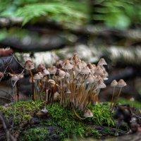 deep forest :: Zinovi Seniak