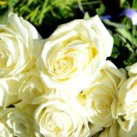 Белые розы :: Елизавета Ряпосова