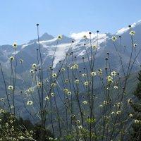 Цветы на фоне гор :: Виталий Купченко