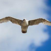 In the Sky :: Vitaliy Turovskyy