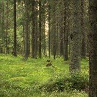 Лесной этюд :: Aнна Зарубина
