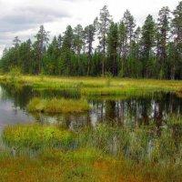 Лесное озеро. :: Галина Полина