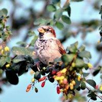 Не злые птицы :: ID@ Cyber.net