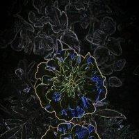 Волшебные цветы :: Виктория Нефедова