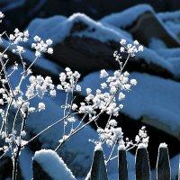 Цветы зимы на рассвете :: Екатерина Торганская