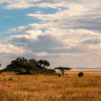 """""""Островок"""" в саванне...Танзания! :: Александр Вивчарик"""