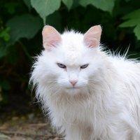 злой кот :: Ваше имя Рамиль Гарипов