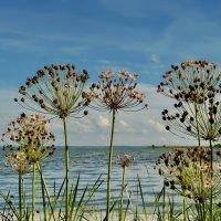 Травы у озера :: Olcen - Ольга Лён