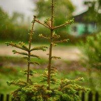 Дождь :: Юрий Фёдоров