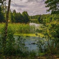 Август озеро в лесу :: Андрей Дворников