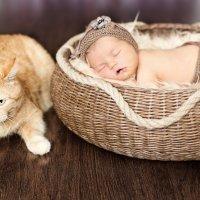 новорожденный :: Светлана Лисова