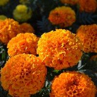 Мои любимые цветы :: Anita Lee