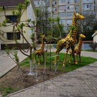 детский сад... :: Murat Bukaev