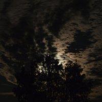 Свет от луны сквозь деревья :: Геннадий Клевцов