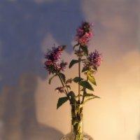 Полевые цветы, полевые цветы, как простые мечты... :: Людмила Богданова (Скачко)