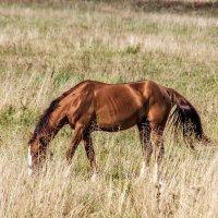 Какая трава -такие и бока. :: Анатолий. Chesnavik.