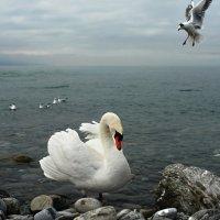 королева озера :: Elena Wymann