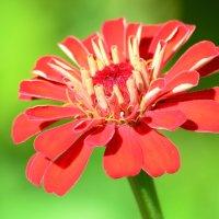 Из жизни цветов. :: Paparazzi