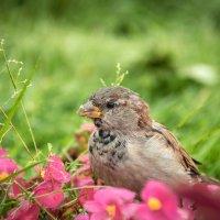 Птицы в городе :: Анна Никонорова