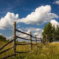 Белогривые лошадки :: Дмитрий