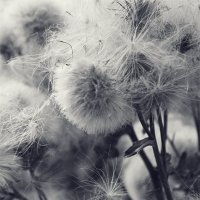Городские цветы :: Marika Hexe