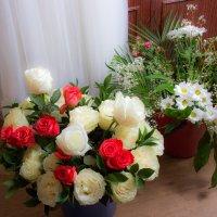 Цветы :: Михаил Барамович