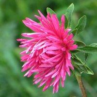 Сказочный цветок :: Татьяна Смоляниченко