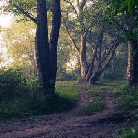 Загадочный лес :: Алексей Левченко
