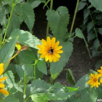 Солнечное лето :: Нина Бутко
