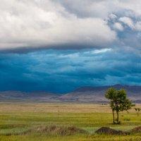 Перед грозой :: Вероника Саркисян