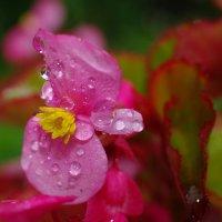 Цветок под дождём... :: НАТАЛЬЯ КАМАЙКИНА