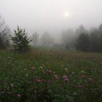 Летним утром туманным... :: Александр Попов